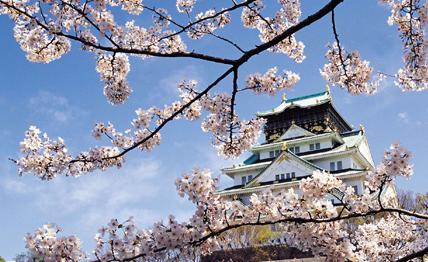 厦门樱花国际日语